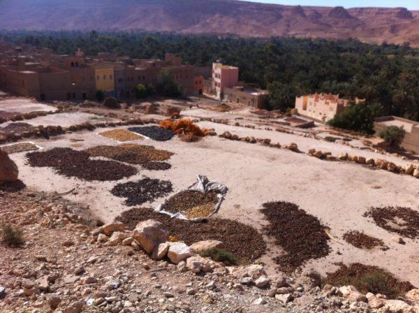 Tafilalet - die größte zusammenhängende Oase Marokkos - Foto © Welz