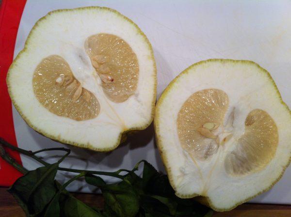 Meine CEDRO Frucht aufgeschnitten - Foto © Welz