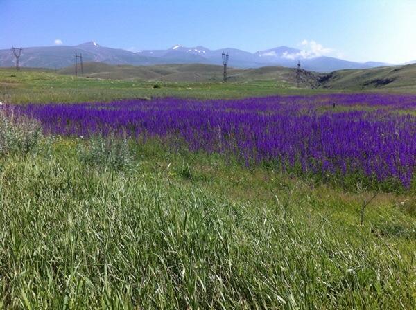 Frühling in Armenien! Foto © Welz