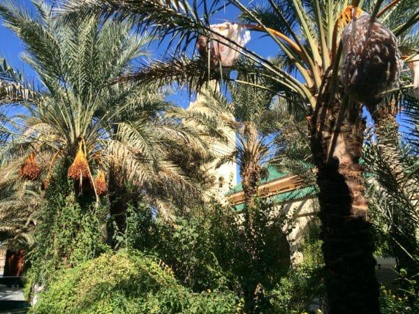 Rissani: Gartenanlage des Mausoleums Moulay Ali Cherif, ein Paradiesgarten! - Foto © Welz