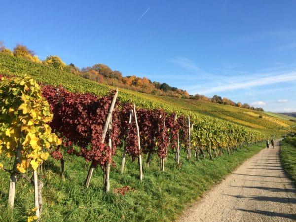 Wandern durch Weinberge auf dem Rehbergerweg. Foto © Welz