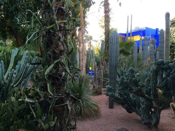 Pflanzen aus 5 Kontinenten: Jardin Majorelle in Marrakech - Foto © Welz
