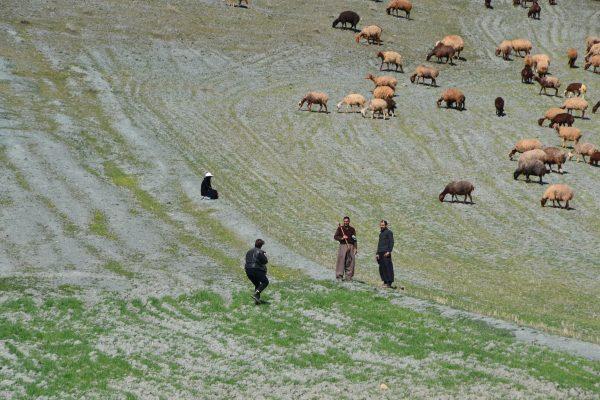 Fotostop: Schafhirten auf dem Weg nach Kermanshah. Foto © Koehne